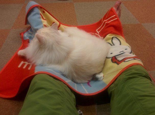 gato durmiendo japon
