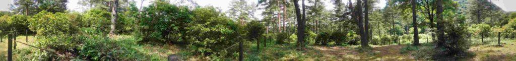 Panorámica de bosque en Kusatsu Onsen