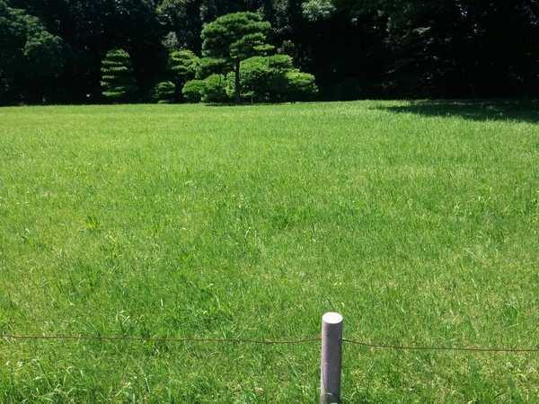 Yoyogi Park en Tokyo