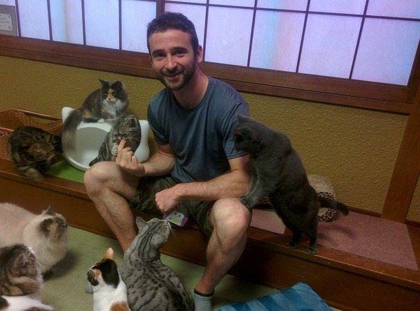 Cafetería de gatos en Osaka, Japón