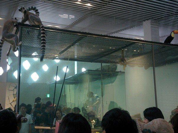 Zoológico con animales en libertad en alrededores de Osaka